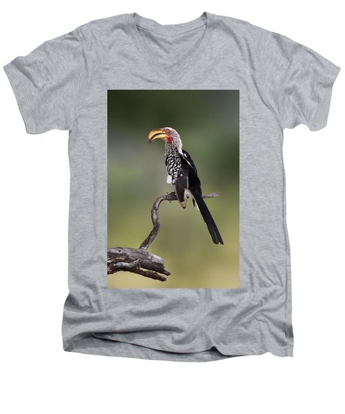 Southern Yellowbilled Hornbill Men's V-Neck T-Shirt by Johan Swanepoel