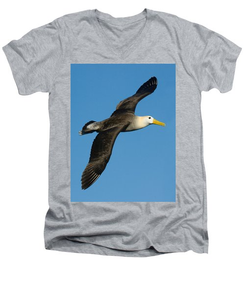 Waved Albatross Diomedea Irrorata Men's V-Neck T-Shirt by Panoramic Images