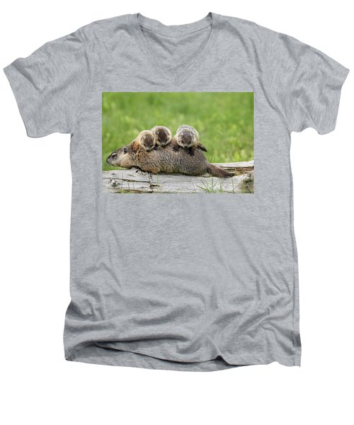 Woodchuck Carrying Young Minnesota Men's V-Neck T-Shirt by Jurgen & Christine Sohns
