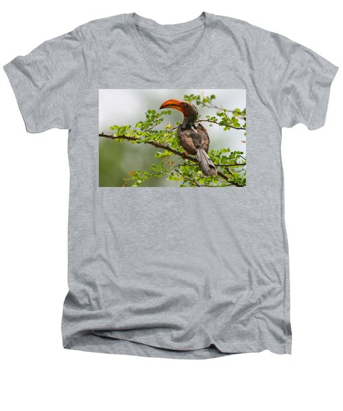 Yellow-billed Hornbill Men's V-Neck T-Shirt by Bruce J Robinson