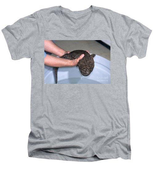 Chinese Giant Salamander Men's V-Neck T-Shirt by Dante Fenolio