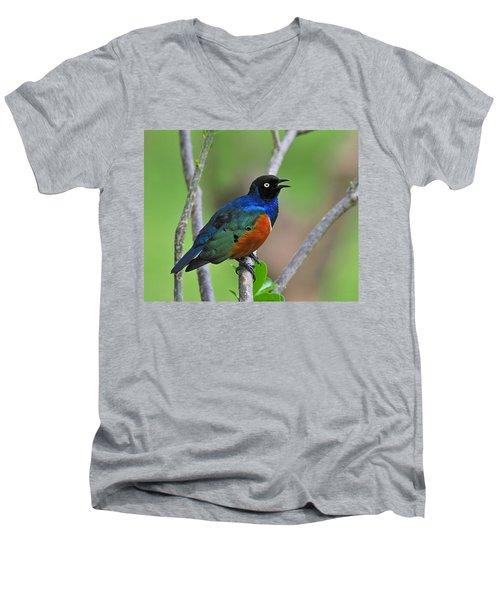 Superb Starling Men's V-Neck T-Shirt by Tony Beck