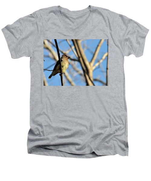 Cedar Wax Wing Men's V-Neck T-Shirt by David Arment