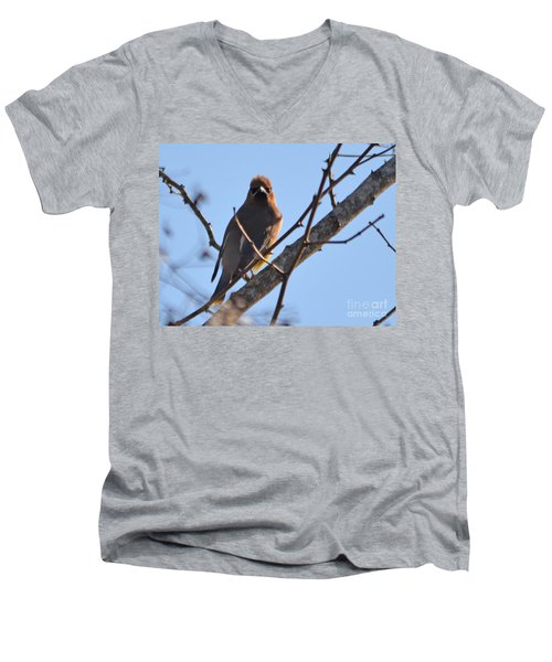 Cedar Wax Wing On The Lookout Men's V-Neck T-Shirt by Barbara Dalton