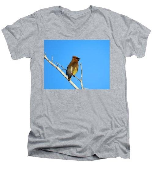 Cedar Waxwing Men's V-Neck T-Shirt by Dianne Cowen