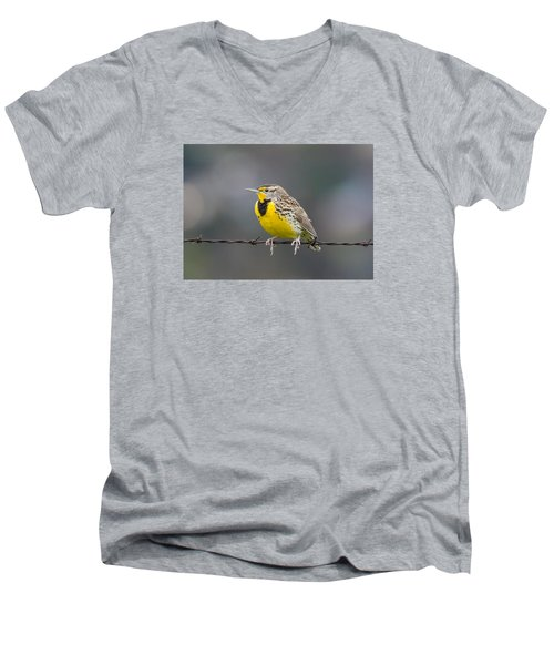 Meadowlark On Barbed Wire Men's V-Neck T-Shirt by Marc Crumpler