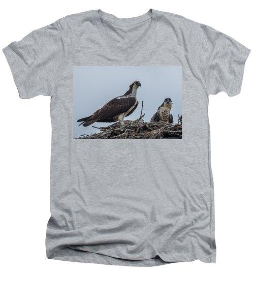 Osprey On A Nest Men's V-Neck T-Shirt by Paul Freidlund