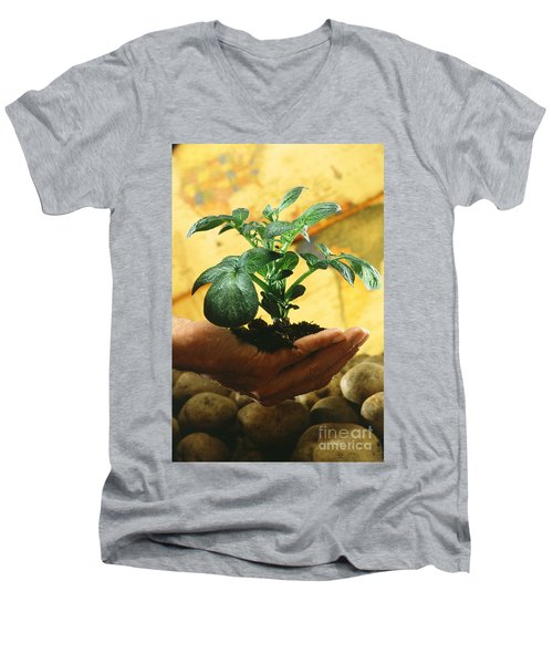 Potato Plant Men's V-Neck T-Shirt by Science Source
