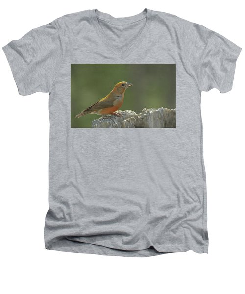 Red Crossbill Men's V-Neck T-Shirt by Constance Puttkemery