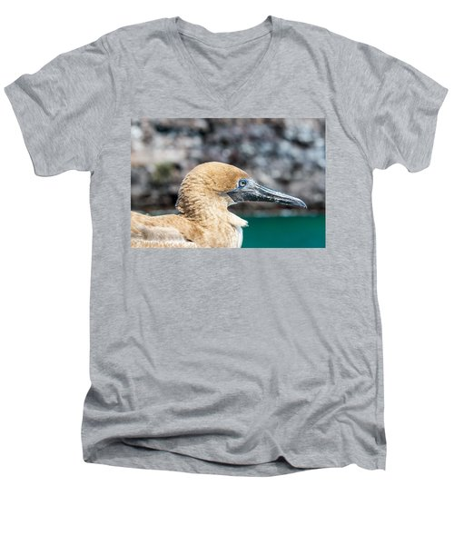 Red Footed Booby Juvenile Men's V-Neck T-Shirt by Jess Kraft