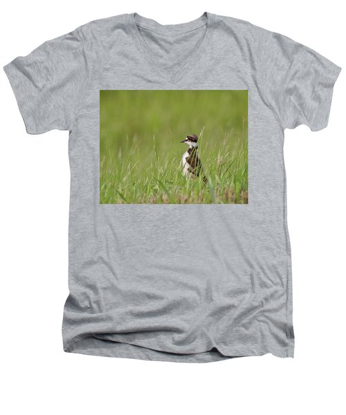 Young Killdeer In Grass Men's V-Neck T-Shirt by Mark Duffy