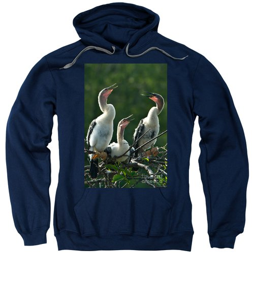 Anhinga Chicks Sweatshirt by Mark Newman