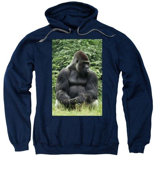 Western Lowland Gorilla Male Sweatshirt by Konrad Wothe