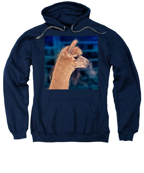 Alpaca Wants To Meet You Sweatshirt by TC Morgan