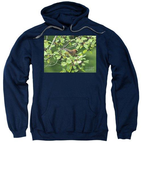 Cedar Waxwing Eating Berries Sweatshirt by Maili Page