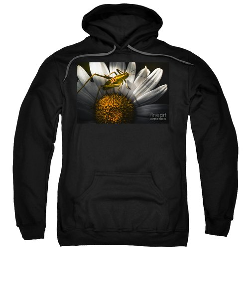 Australian Grasshopper On Flowers. Spring Concept Sweatshirt by Jorgo Photography - Wall Art Gallery