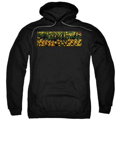 Flowers In Hyde Park, City Sweatshirt by Panoramic Images
