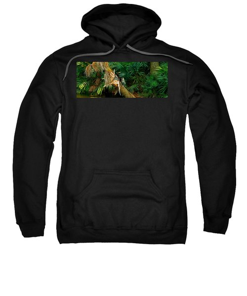 Anhinga Anhinga Anhinga On A Tree Sweatshirt by Panoramic Images