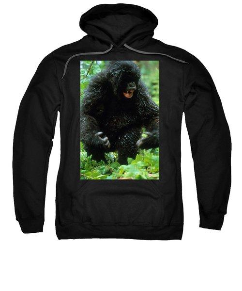 Angry Mountain Gorilla Sweatshirt by Art Wolfe