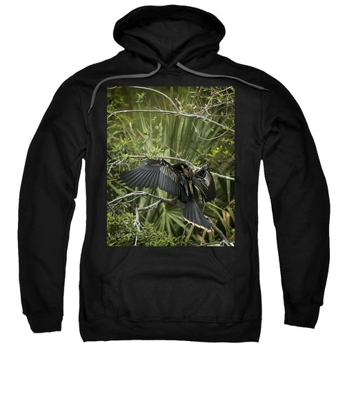 Anhinga Papa Sweatshirt by Phill Doherty
