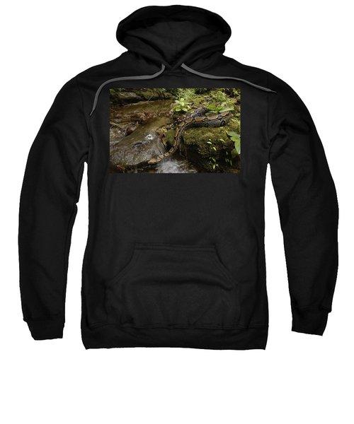 Boa Constrictor Crossing Stream Sweatshirt by Pete Oxford