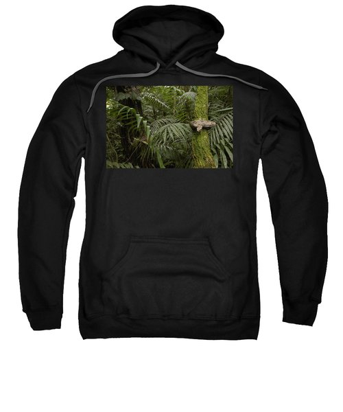 Boa Constrictor In The Rainforest Sweatshirt by Pete Oxford