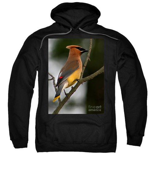 Cedar Wax Wing II Sweatshirt by Roger Becker