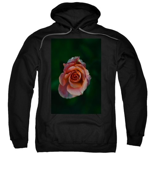 Close-up Of A Pink Rose, Beverly Hills Sweatshirt by Panoramic Images