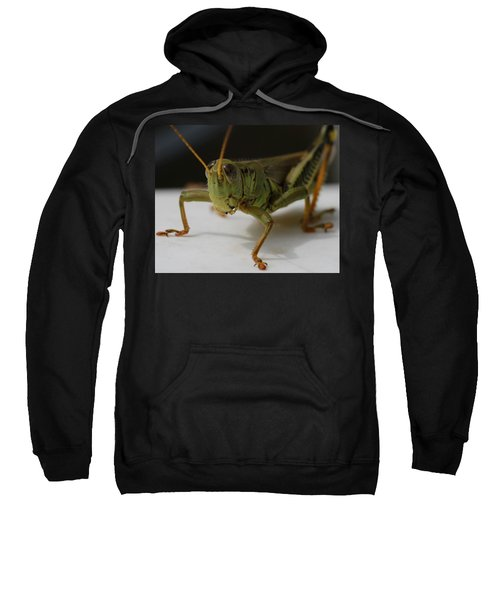 Grasshopper Sweatshirt by Dan Sproul