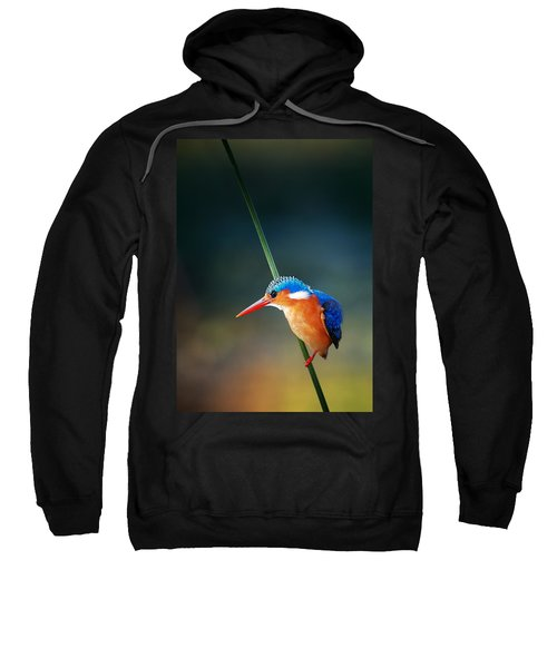 Malachite Kingfisher Sweatshirt by Johan Swanepoel