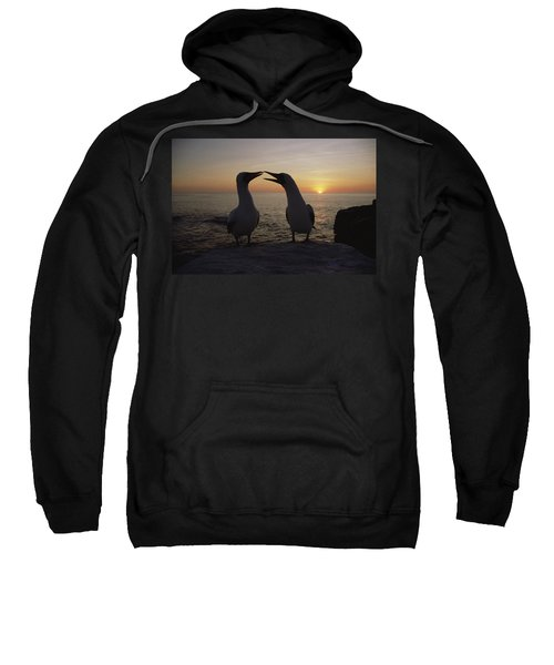 Masked Booby Couple Courting Galapagos Sweatshirt by Konrad Wothe
