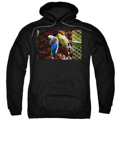 Parakeets Sweatshirt by Pati Photography