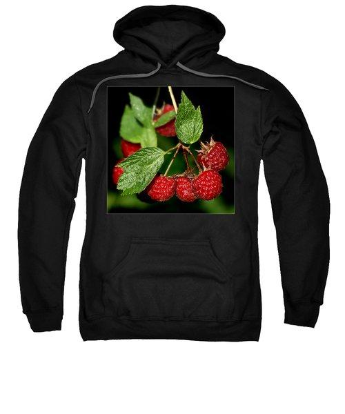 Raspberries Sweatshirt by Nikolyn McDonald