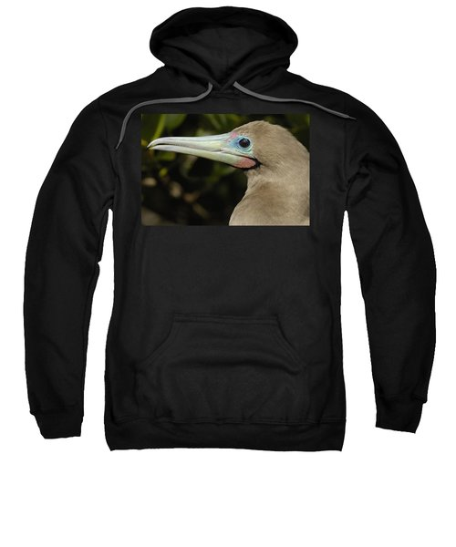 Red-footed Booby Close Up Galapagos Sweatshirt by Pete Oxford