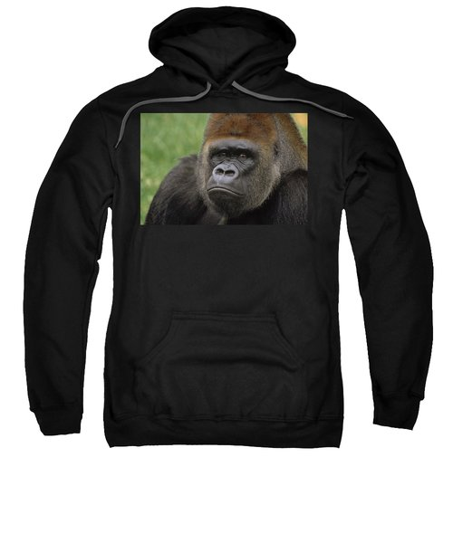 Western Lowland Gorilla Silverback Sweatshirt by Gerry Ellis