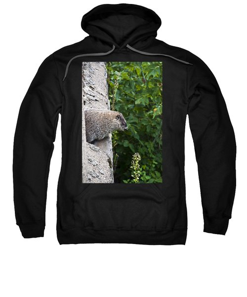 Groundhog Day Sweatshirt by Bill Cannon