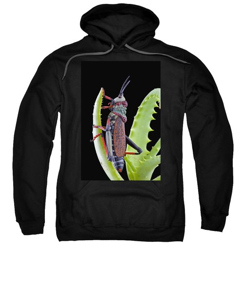 Koppie Foam Grasshopper South Africa Sweatshirt by Piotr Naskrecki