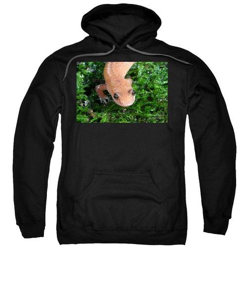 Spring Salamander Sweatshirt by Ted Kinsman