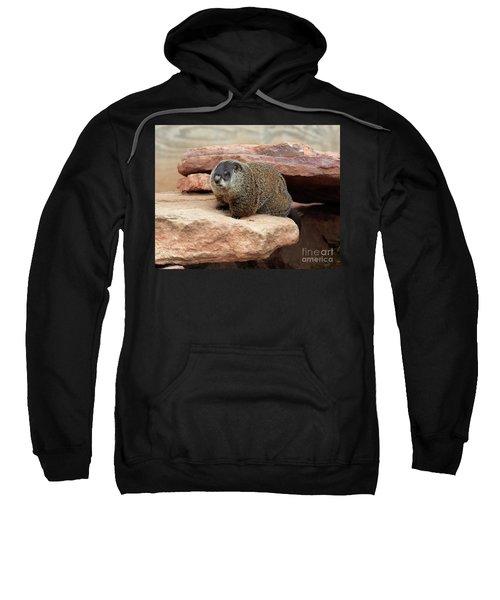 Groundhog Sweatshirt by Louise Heusinkveld