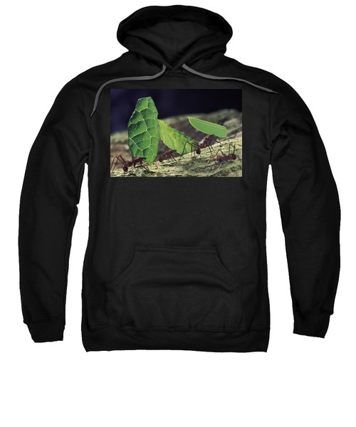 Leafcutter Ant Atta Cephalotes Workers Sweatshirt by Mark Moffett