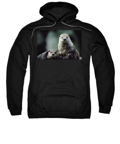 North American River Otter Lontra Sweatshirt by Gerry Ellis