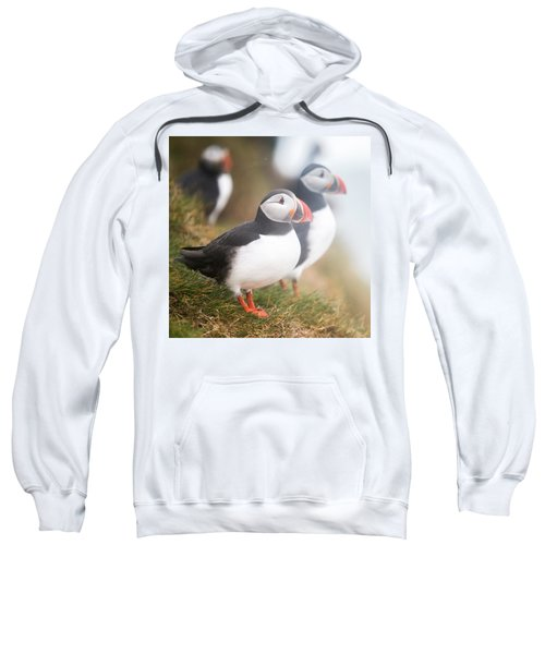 Atlantic Puffins Fratercula Arctica Sweatshirt by Panoramic Images