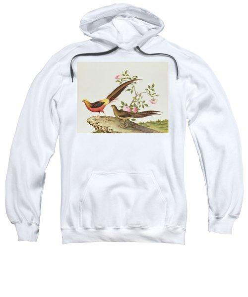 A Golden Pheasant Sweatshirt by Chinese School