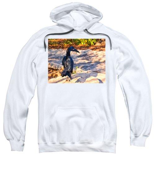 Abyssinian Ground Hornbill Sweatshirt by Chris Flees
