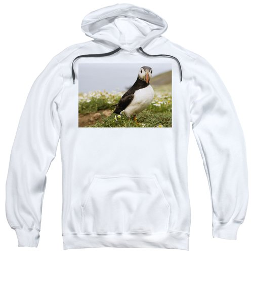 Atlantic Puffin In Breeding Plumage Sweatshirt by Sebastian Kennerknecht