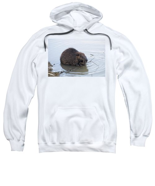 Beaver Chewing On Twig Sweatshirt by Chris Flees