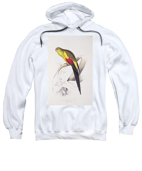 Black Tailed Parakeet Sweatshirt by Edward Lear