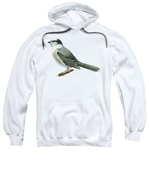 Canada Jay Sweatshirt by Anonymous