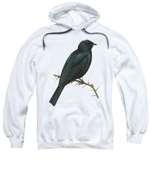 Cuckoo Shrike Sweatshirt by Anonymous