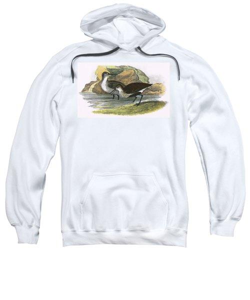 Dunlin Sweatshirt by English School
